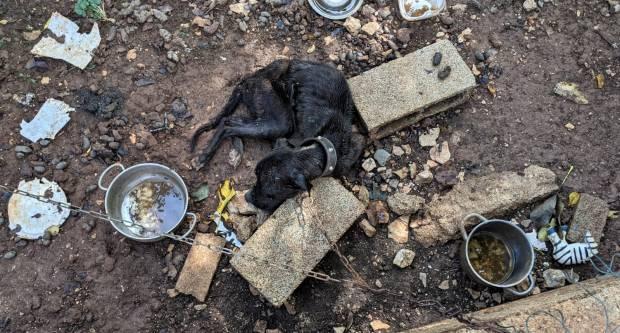 Pas dugo umirao na lancu od gladi, nikoga nije bilo briga
