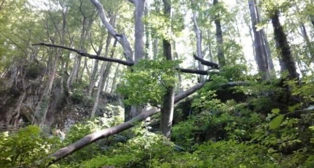 Šumska krađa i dragovoljna predaja oružja