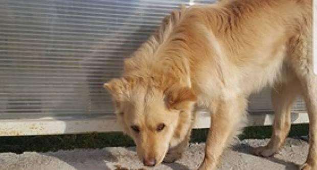 Napušteni pas kod Bertelovaca treba pomoć i udomitelja