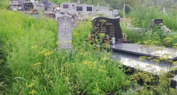 Ogorčeni mještani Orljavca mole da se prije prvog mraza pokosi trava na mjesnom groblju u Orljavcu