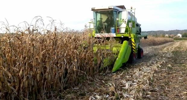 POLJOPRIVREDA LIPIK: Soja požnjevena, uskoro berba kukuruza