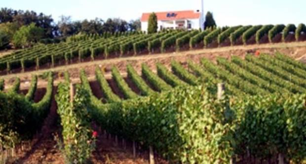 Cesta ruža i vina vodi od Požege do Pleternice