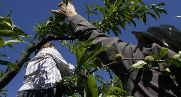 Obavijest voćarima da obave testiranje protiv uzorčnika biljnih bolesti