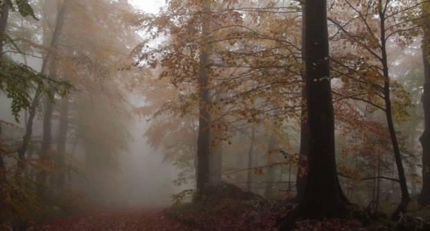 Vrijeme danas oblačno, mjestimice s maglom, moguća kiša, najviša dnevna temperatura do 7°C