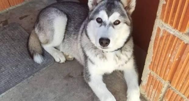 Nestao pas na području Brestovca, nalazniku novčana nagrada