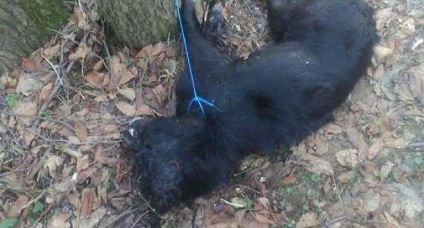 Nepoznati počinitelj kod Stražemana ubio dva psa