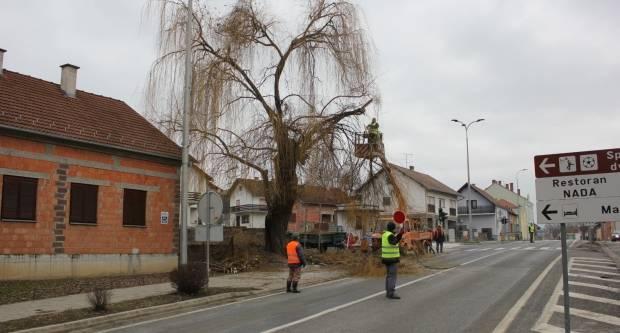 Sječa dotrajalih stabala u centru Lipika