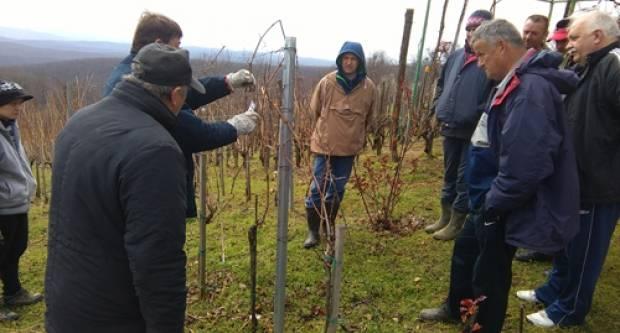 Prijavite se za Zimsku školu rezidbe vinove loze – Kaptol 2019.