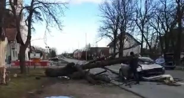 Bizarna nesreća kod Sl. Broda: Stablo kestena palo na automobil u vožnji, vozačica ozlijeđena