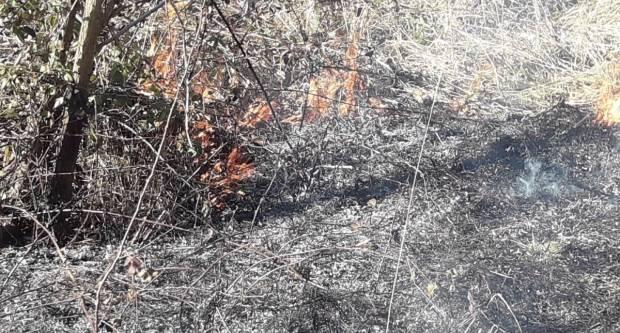 Tijekom vikenda krađe drva i mesa, psi bez nadzora, požari na otvorenom...