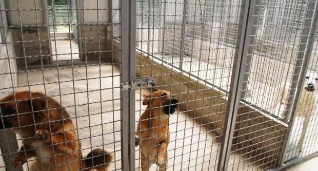 Grad Pakrac sufinancira udomljavanje pasa: Bela, Lola i Mima dobile obitelj