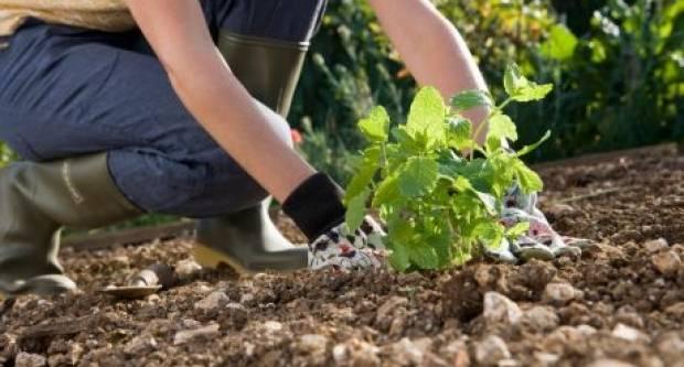 Travanj - mjesec intenzivnih radova u vrtu