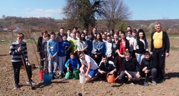Vrijedni osnovnoškolci zasadili voćnjak aronije i starih sorti
