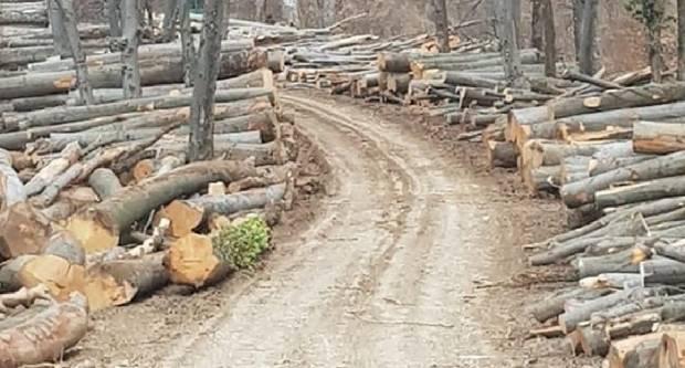 Evo što stoji iza nemilosrdne sječe hrvatskih šuma?