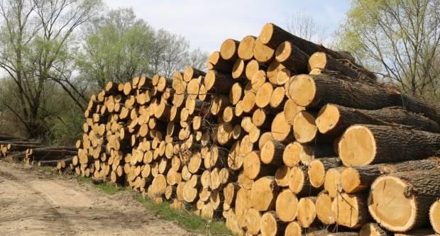 Što stoji iza nemilosrdne sječe hrvatskih šuma?