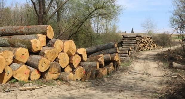Policija je jučer zabilježila šumsku krađu i dvije prometne nesreće