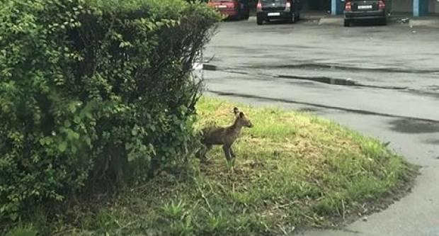 Iz ovog grada samo lisice ne odlaze...