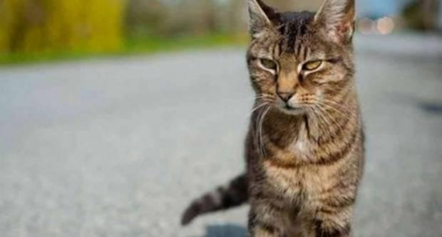 Policija dovršila istraživanje nad 62-godišnjakom koji je u dvorištu kuće tupim predmetom ubio mačku