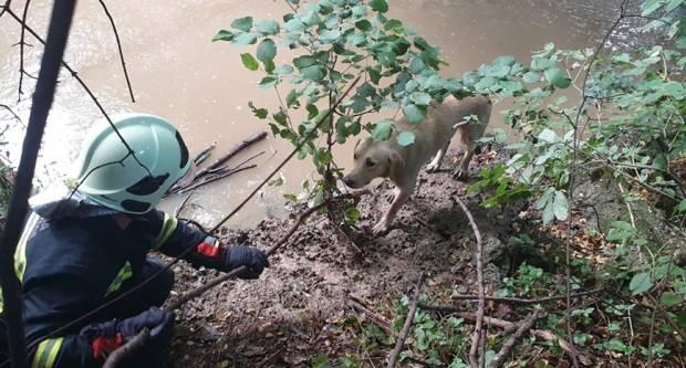 Požeški vatrogasci spašavali psa koji je zapeo kod Emovačkog potoka