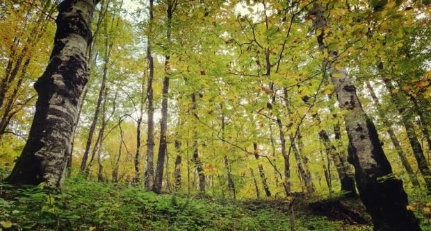 Prikupljanje ponuda za kupnju šuma i/ili šumskog zemljišta