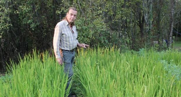Danas u ʺPlodovima zemljeʺ pogledajte lipičkog Nizozemca Barta i njegovu rižu u Skenderovcima