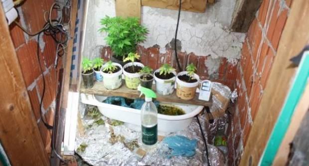 U pretresu kuće u Pleternici kod 37-godišnjaka pronađena marihuana i oprema namijenjena uzgoju marihuane
