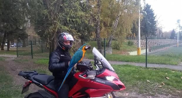 ʺRođoʺ najposlušniji papagaj u gradu