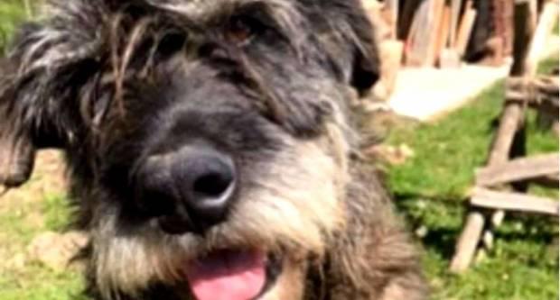 Ovo je psić Kiro. Netko mu je u Osijeku stavio petardu u anus, mučio se pa umro