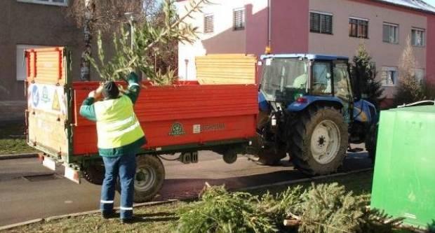 Komunalac Požega odvozi božićna drvca sve do 17. siječnja