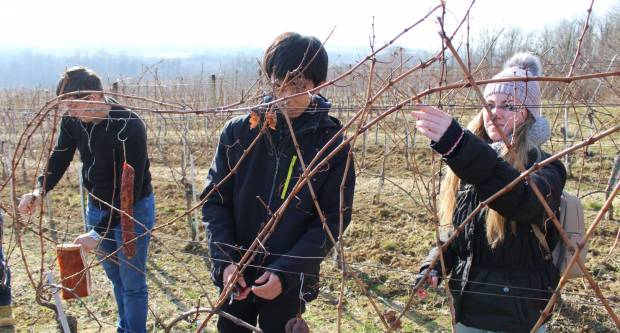 Prijavite se na 19. ʺŠkolu rezidbe vinove loze – Kaptol 2020.ʺ