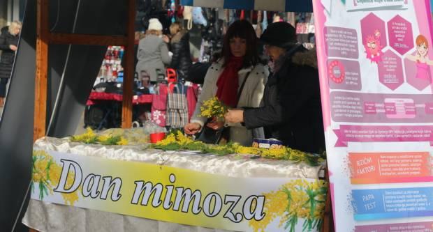 Obilježava se Dan mimoza - Nacionalni dan borbe protiv raka vrata maternice