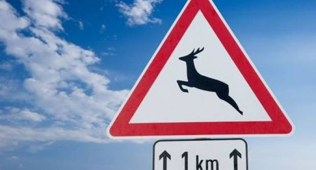 MNOGO BRŽA PROCEDURA ZA VOZAČE: Vlada financira policu osiguranja u slučaju naleta na divljač!