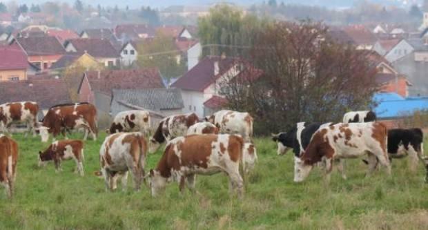 Premijer Plenković: Otkupit ćemo od malih mljekara sav tržišni višak