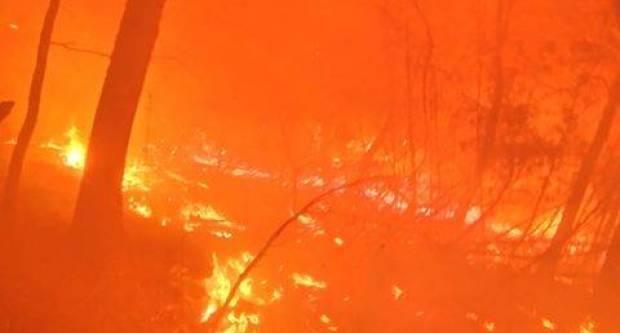Palili suhu travu i korov, te se vatra proširila na šumu u blizini Petnje