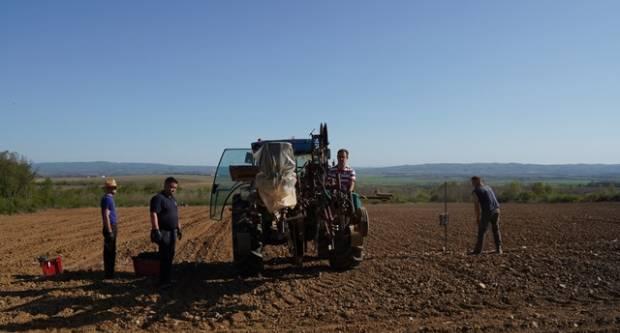 Veleučilište u Požegi podiglo pokusni nasad vinograda uz snimanje materijala za e-učenje