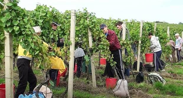 Poslodavcima je na raspolaganju više od 50.000 sezonskih radnika u poljoprivredi