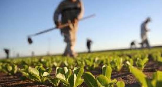 Što je sve pogrešno s hrvatskom poljoprivredom: U 10 godina isplaćeno 40 milijardi kn poticaja, a proizvodnja pada