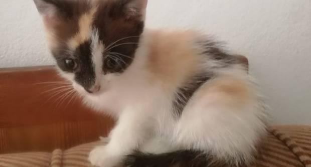 Udruga Sirius Požega traži udomitelja za dvije male mace