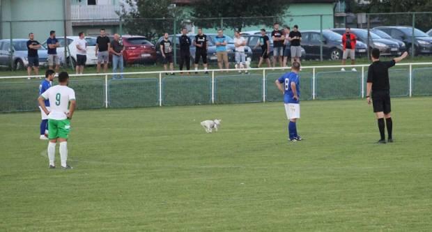 ʺZvijezdaʺ jučerašnjeg kvalifikacijskog susreta u Ruščici bio je pas