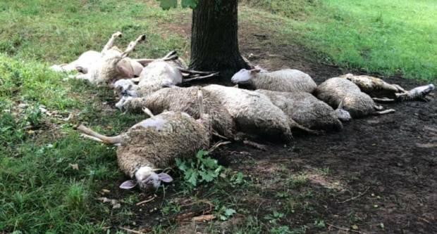Ljudi velikog srca pomažu Đuri kojemu je grom ubio 20-ak ovaca