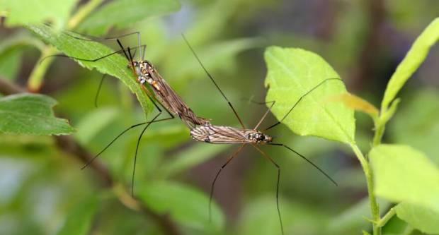 Prirodnim preparatima u borbu protiv komaraca