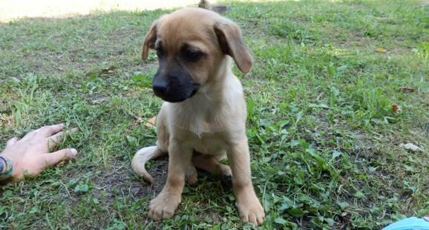 Jednokratna novčanu naknadu za udomljavanje napuštenih pasa iz azila Tip-Tip
