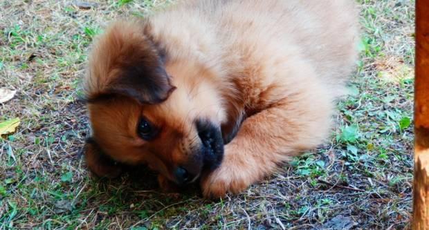 Odluka o sufinaciranju sterilizacije pasa i mačaka i označavanja pasa mikročipom