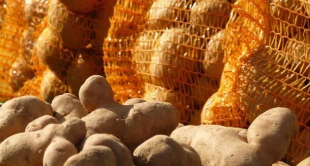 Višak krumpira na europskom tržištu, proizvođači ne znaju gdje s njim