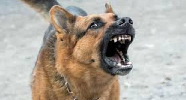 Pas bez nadzora u Pakracu, marihuana kod 18-godišnjaka u Požegi