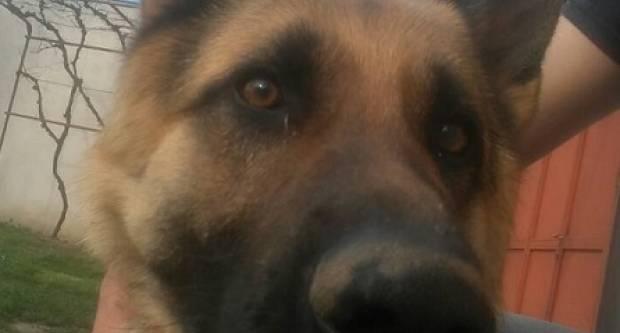 Nestao pas u Velikoj, jeste li ga vidjeli?