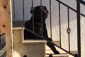 Vijećnica Puač: ¨Moj pas Tom se zaljubio i pobjegao, poslali su mi krivo ispunjenu uplatnicu¨