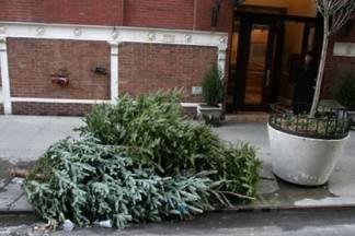 Do 19. siječnja odvoz božićnih drvaca u Požegi